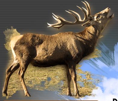 Deer Antler Plus